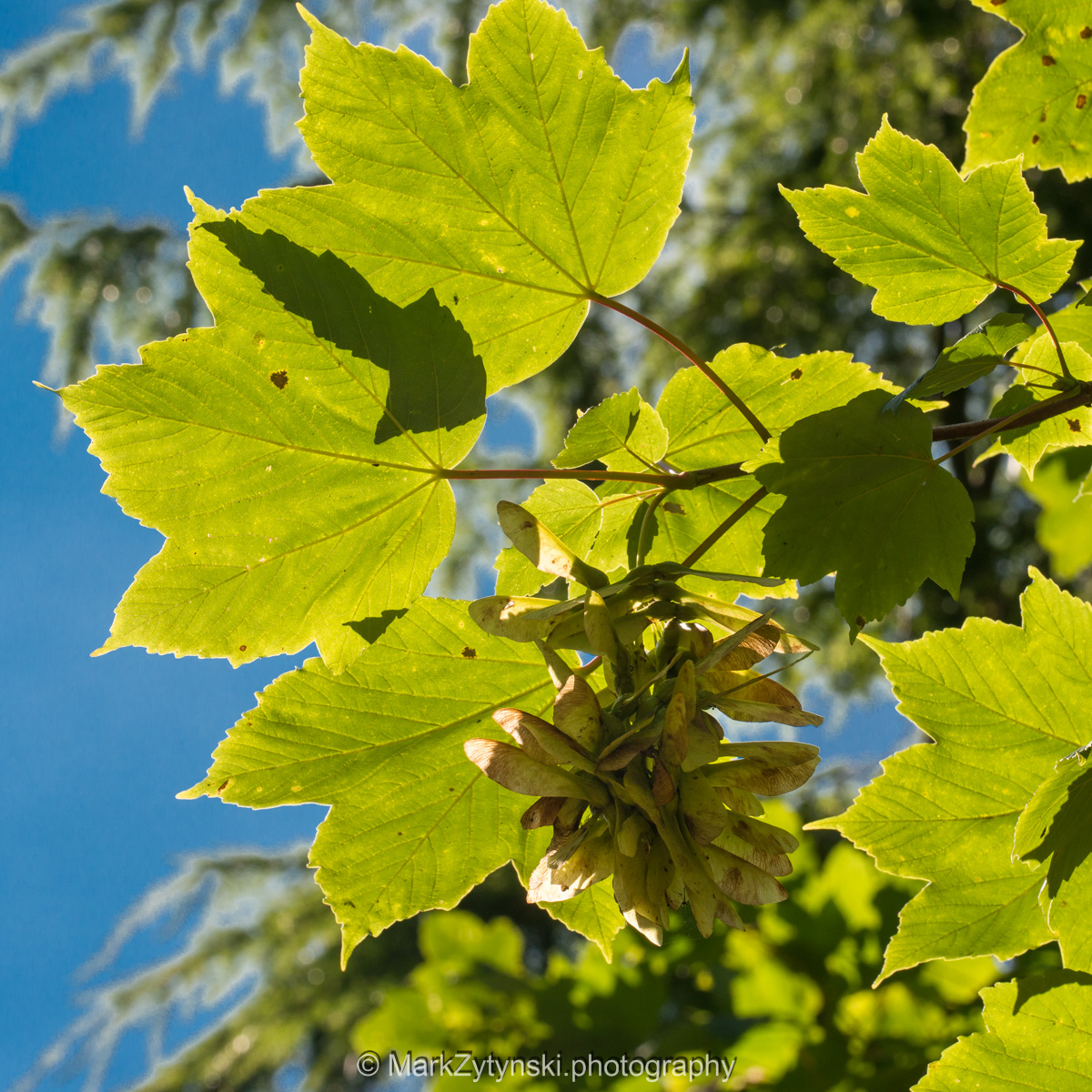 Zytynski-woodland-trust-5597.jpg