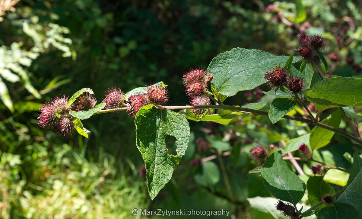 Zytynski-woodland-trust-5645.jpg