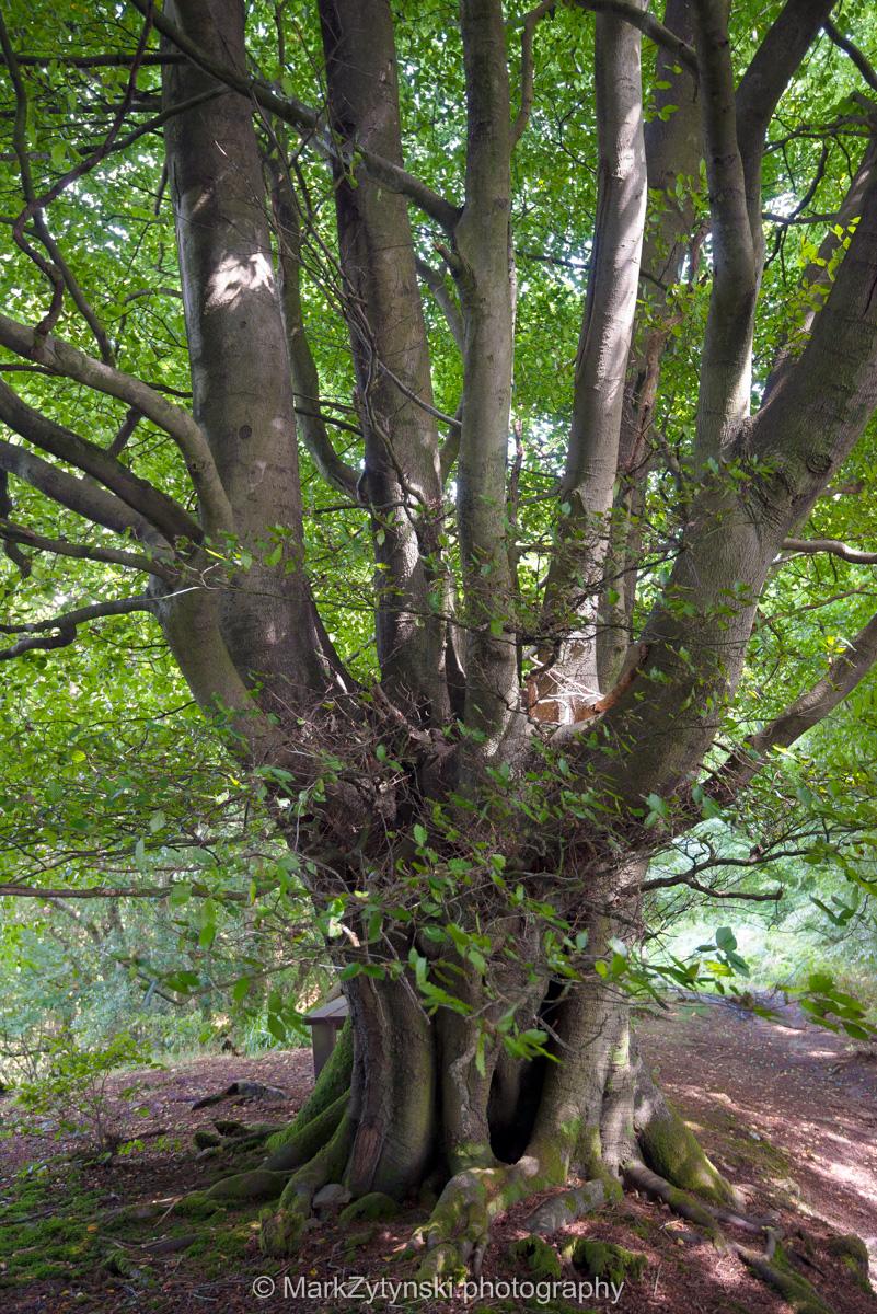 Zytynski-woodland-trust-5733.jpg