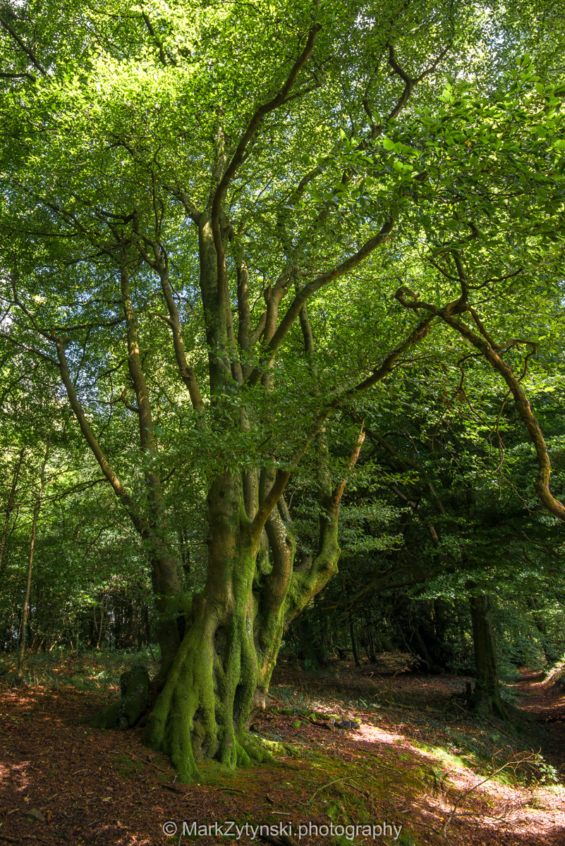 Zytynski-woodland-trust-5726.jpg