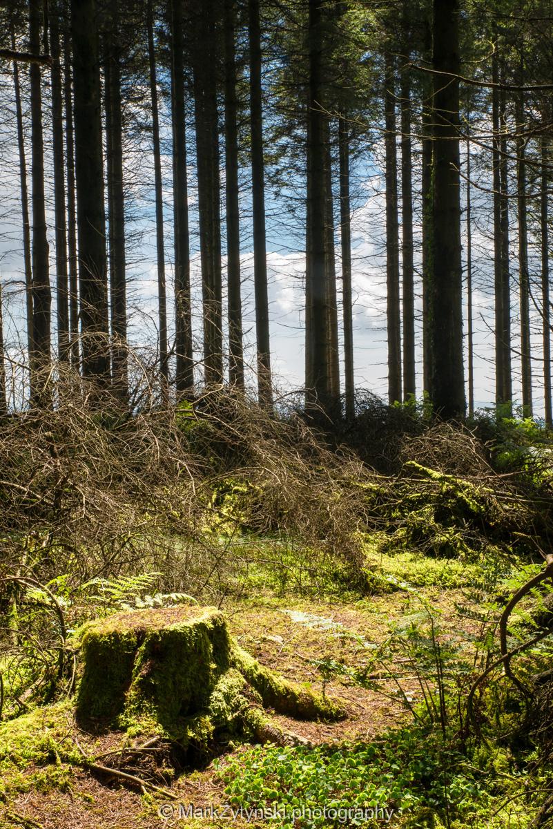 Zytynski-woodland-trust-5783.jpg