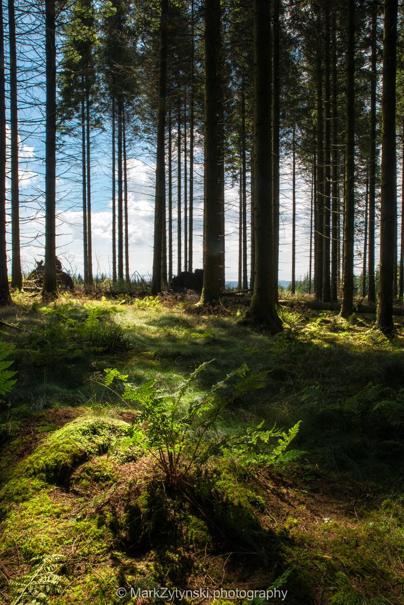 Zytynski-woodland-trust-5784.jpg