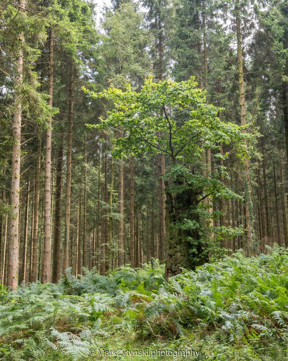 Zytynski-woodland-trust-5855.jpg