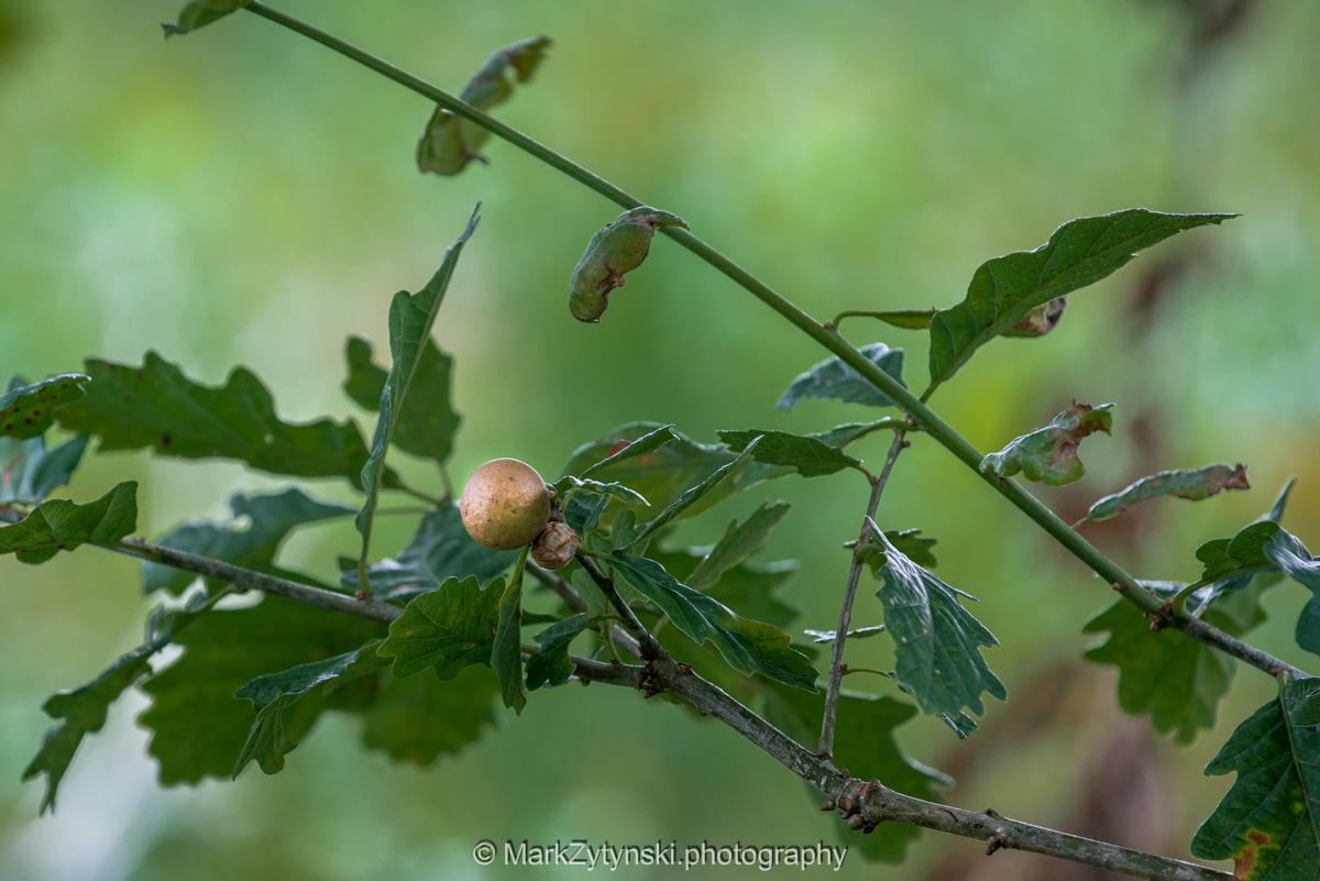 Zytynski-woodland-trust-5965.jpg