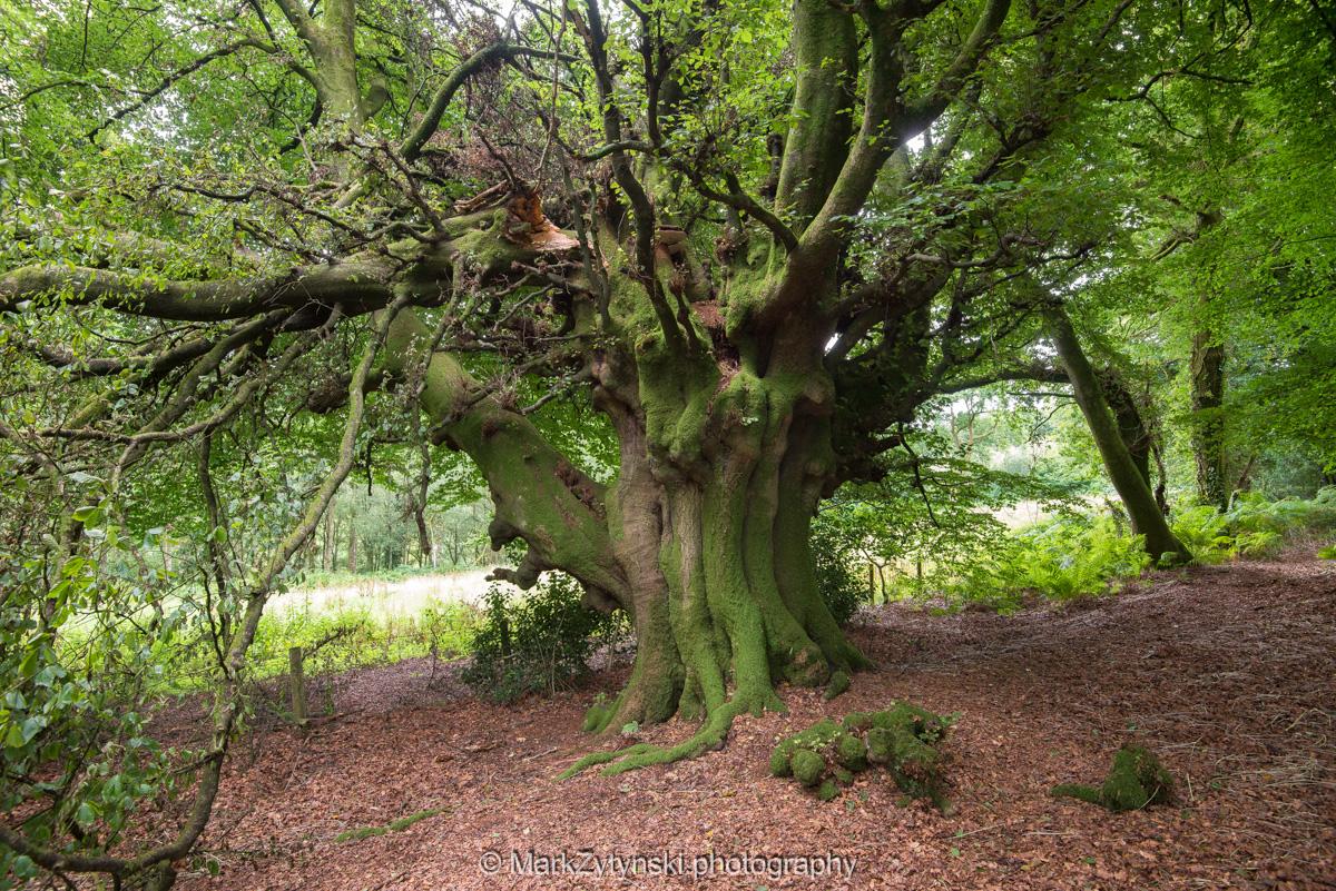 Zytynski-woodland-trust-5933.jpg