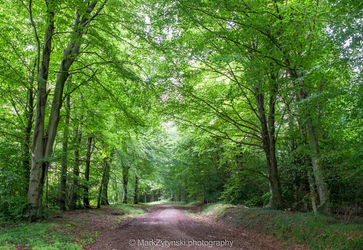 Zytynski-woodland-trust-5993.jpg