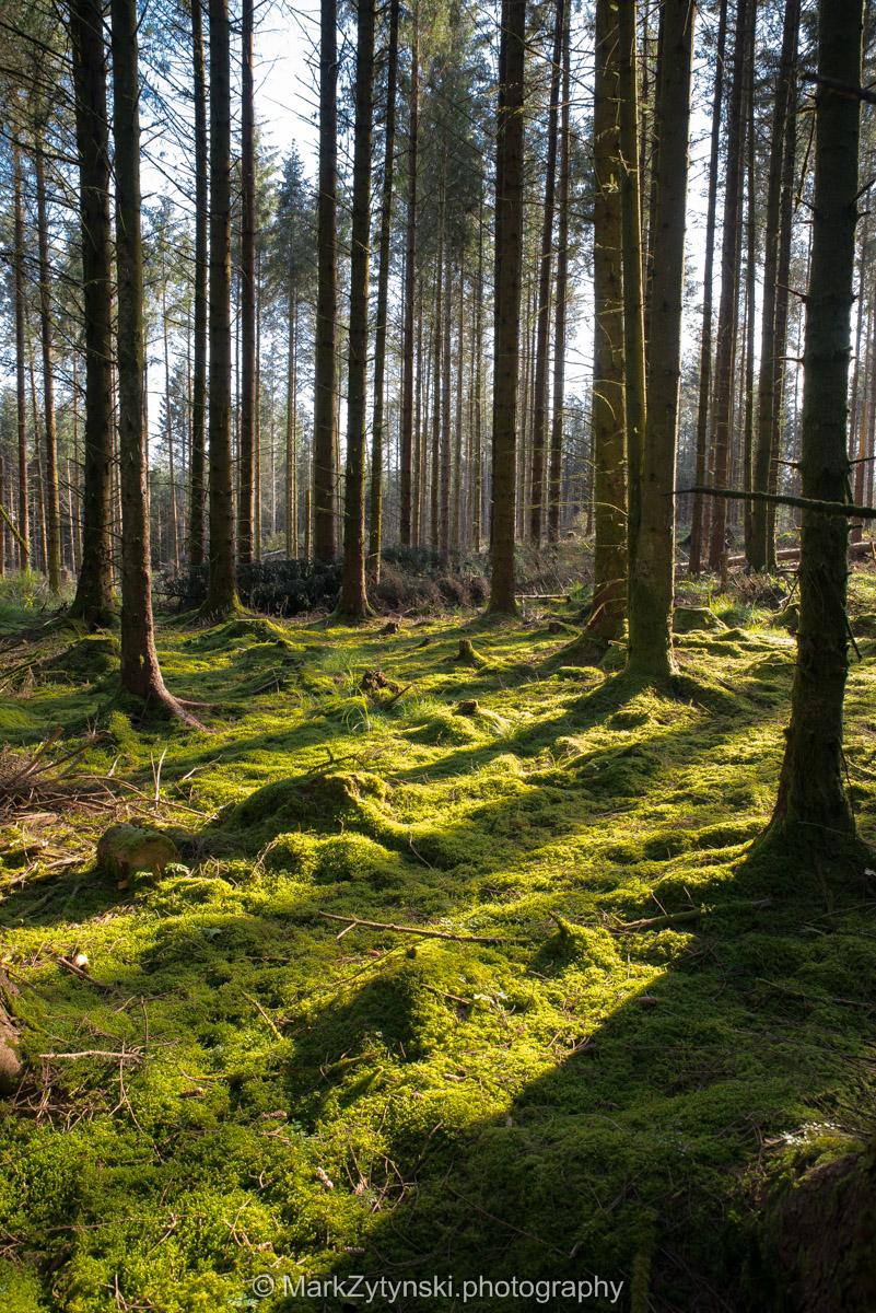 Trees-woodlands-1712.jpg