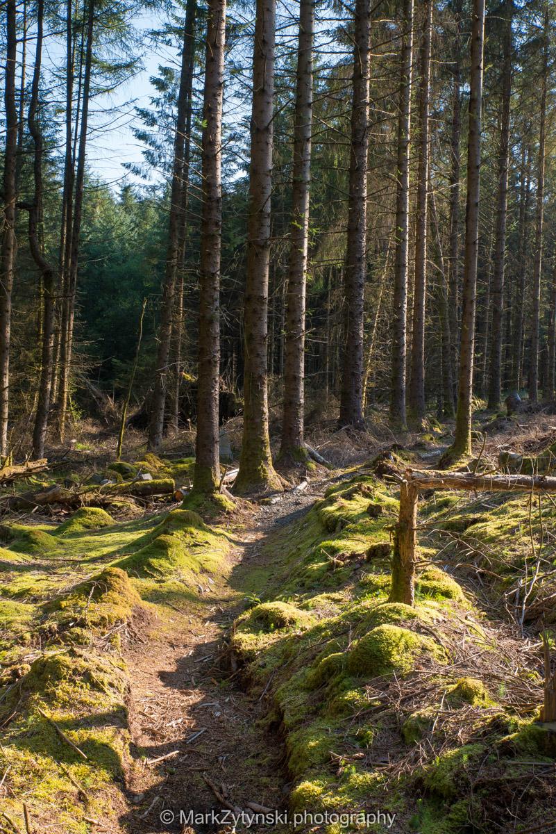 Trees-woodlands-2097.jpg