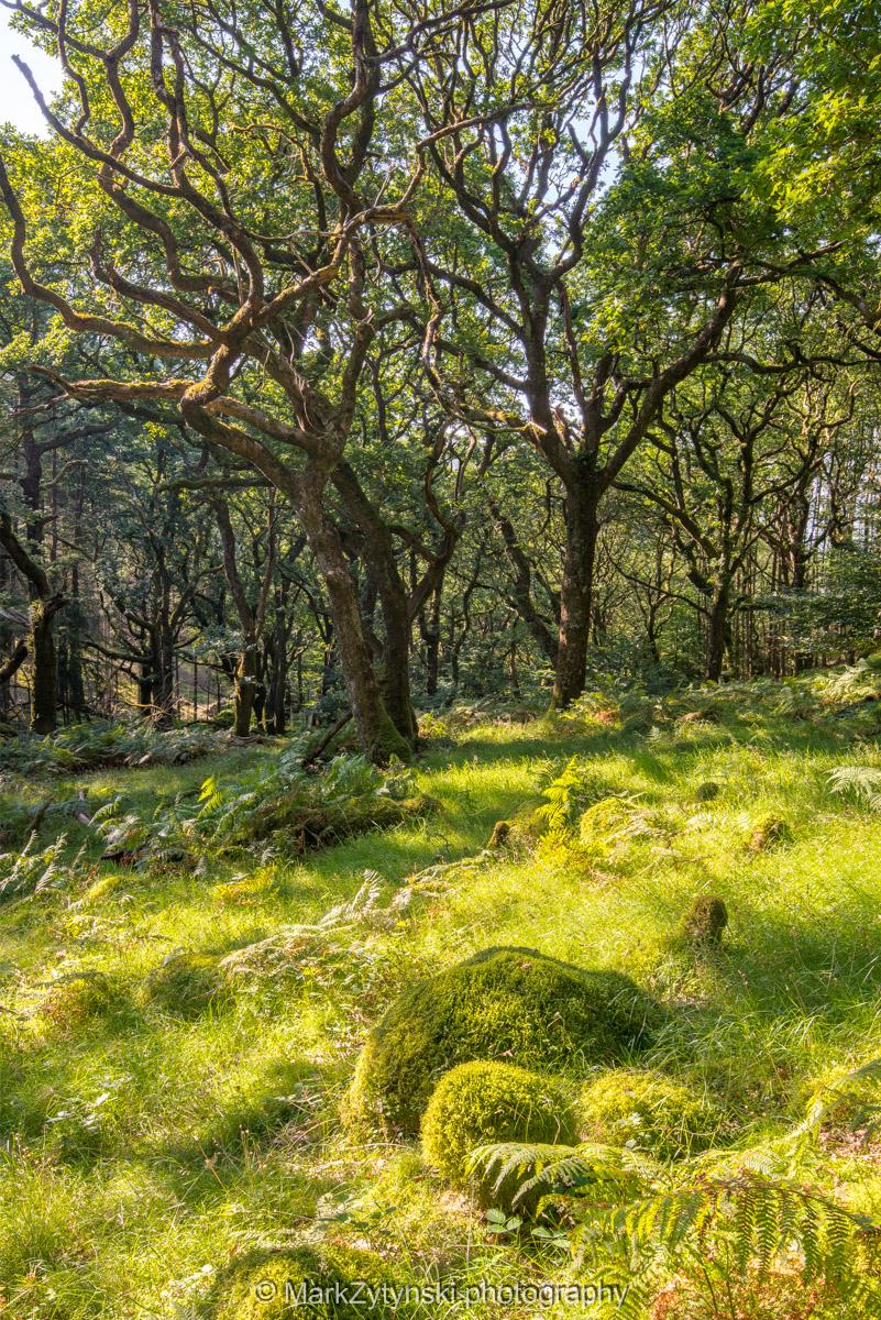 Trees-woodlands-2116.jpg