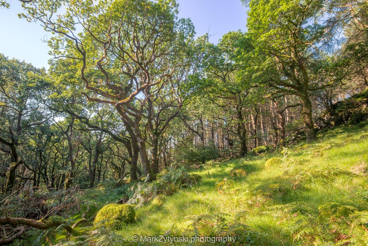 Trees-woodlands-2122.jpg