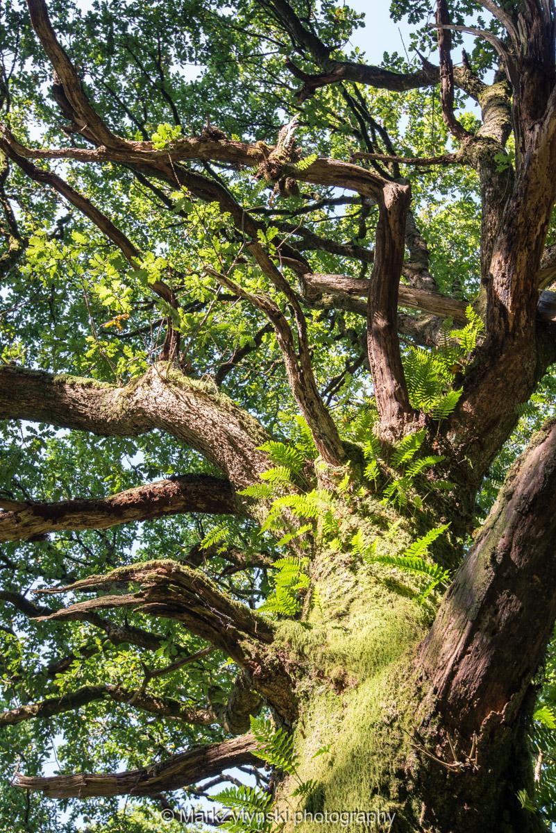 Trees-woodlands-2154.jpg