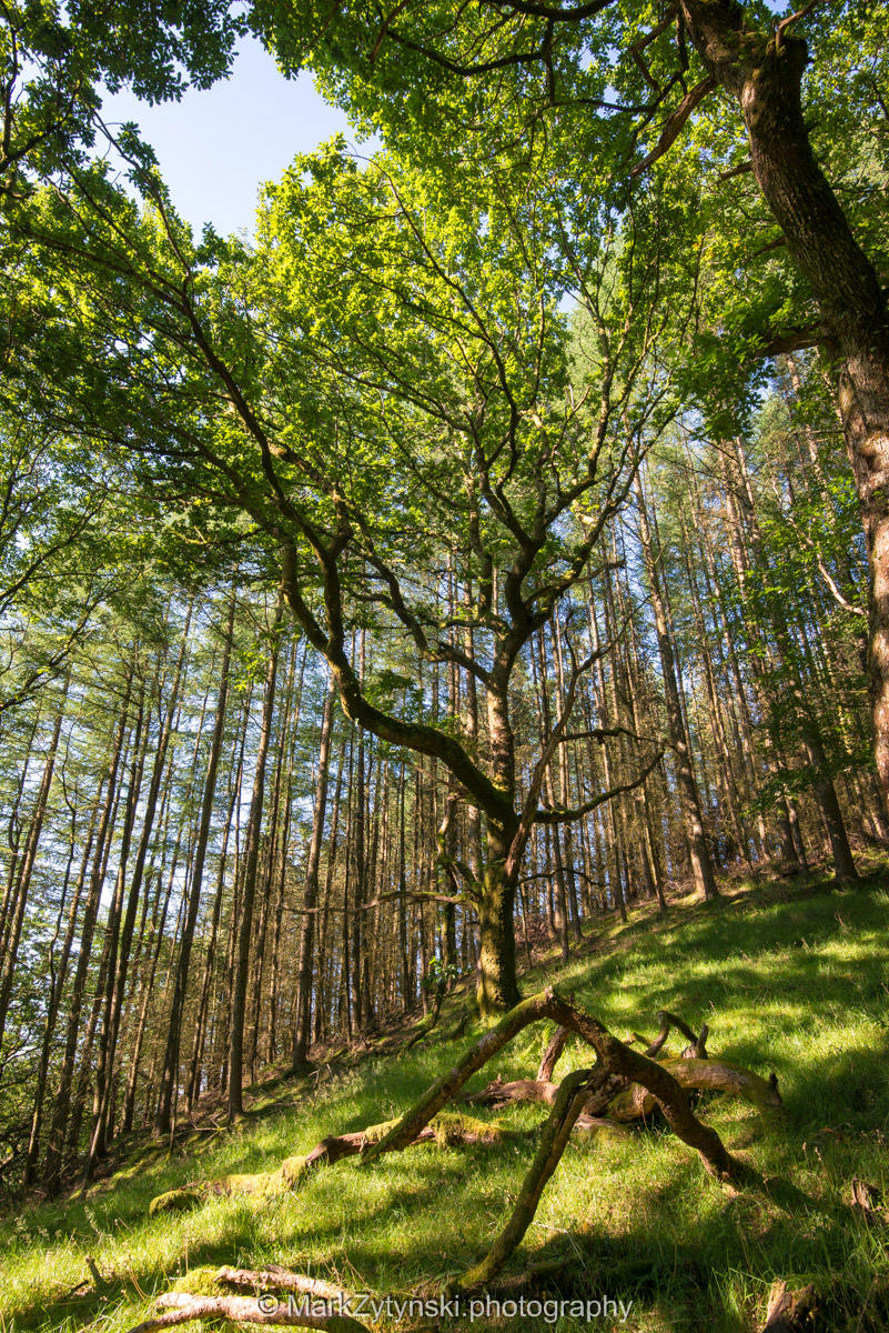 Trees-woodlands-2156.jpg