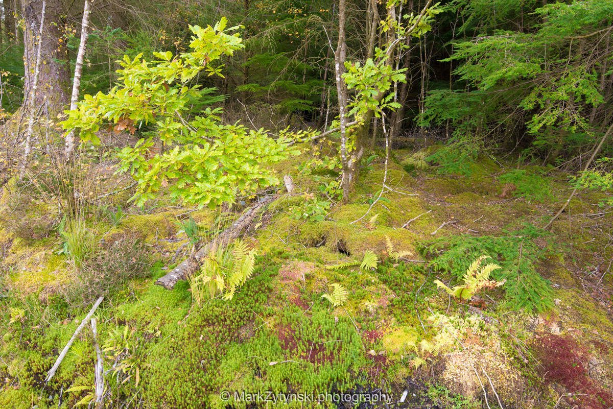 Trees-woodlands-2479.jpg