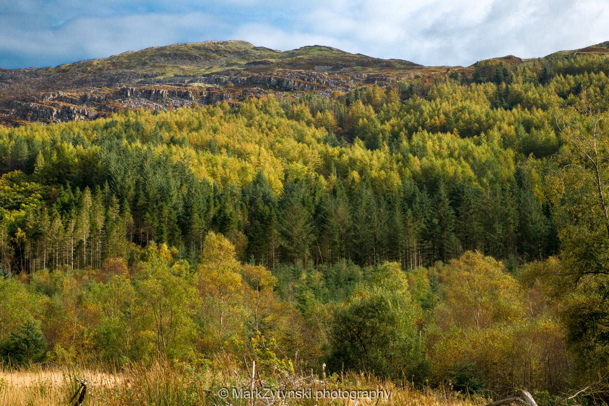 Trees-woodlands-2504.jpg