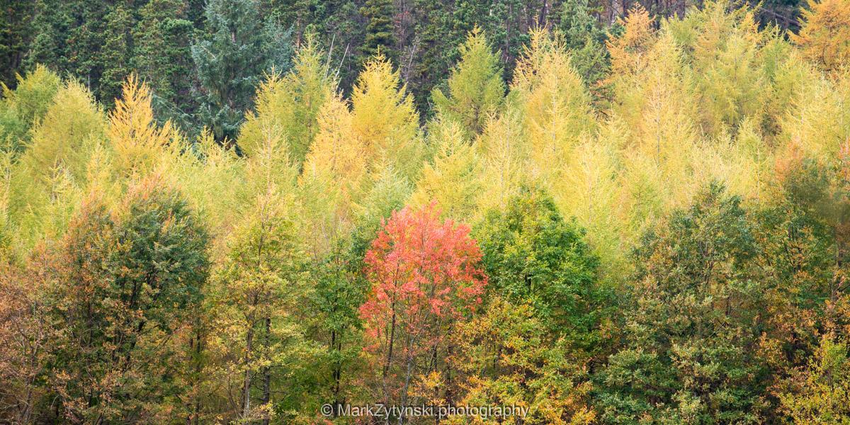 Trees-woodlands-2808.jpg