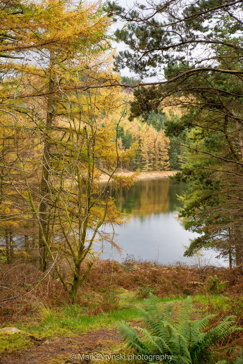 Trees-woodlands-2960.jpg