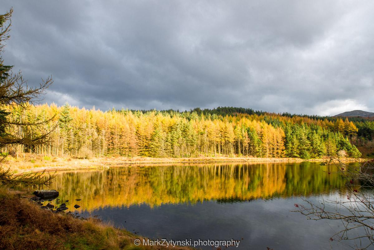 Trees-woodlands-2971.jpg
