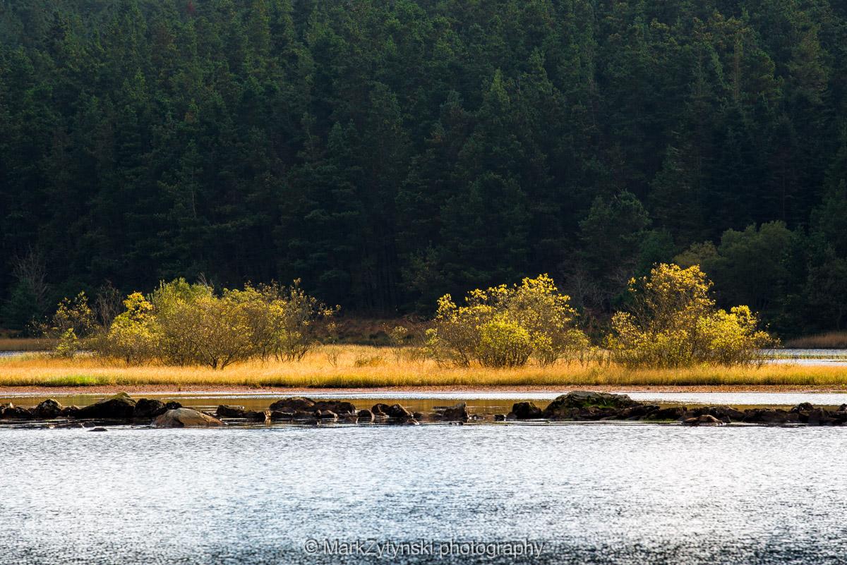Trees-woodlands-2985.jpg