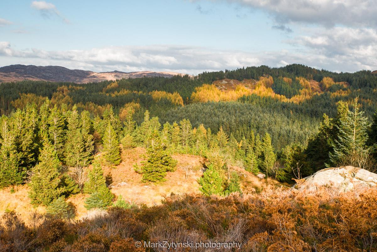 Trees-woodlands-3000.jpg
