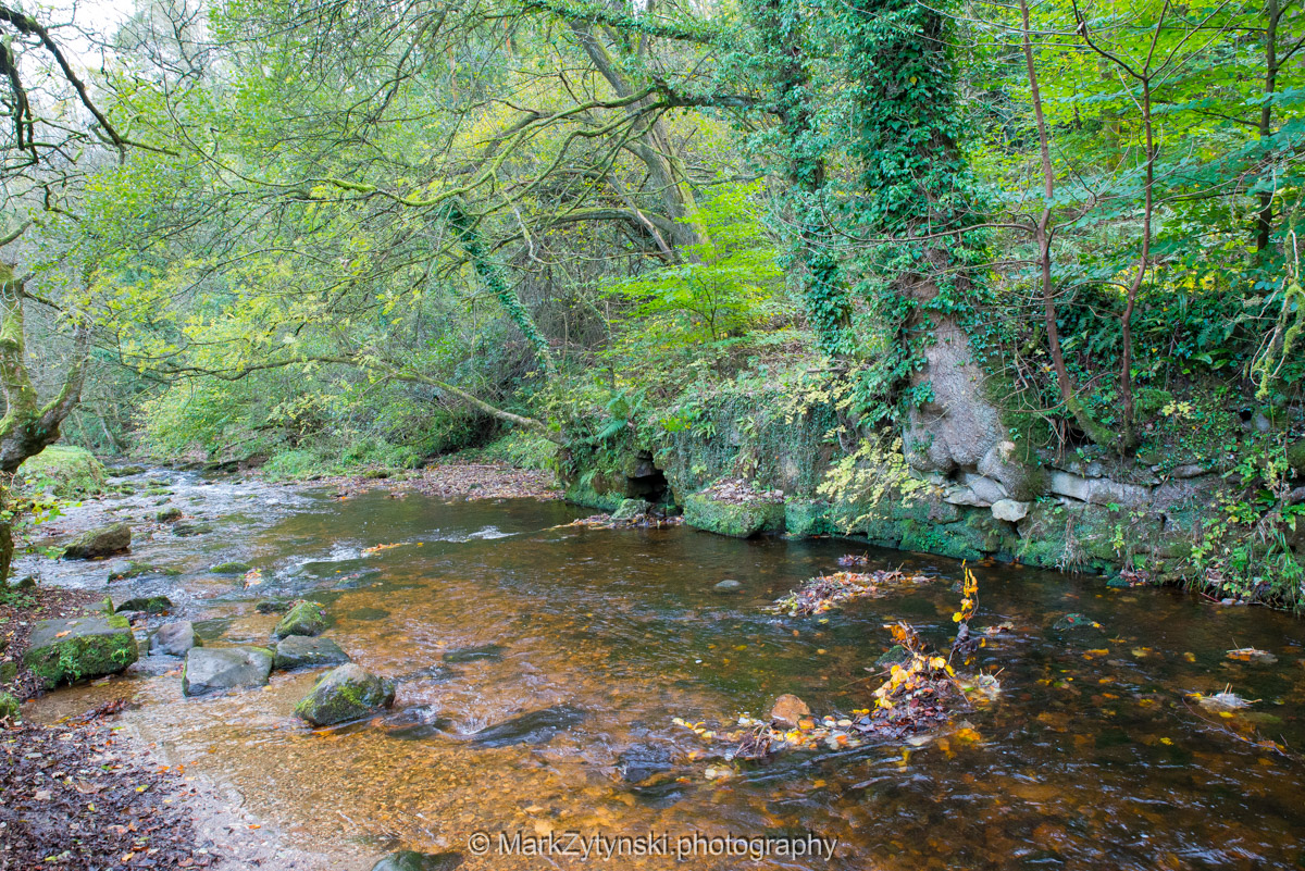 Trees-woodlands-8429.jpg