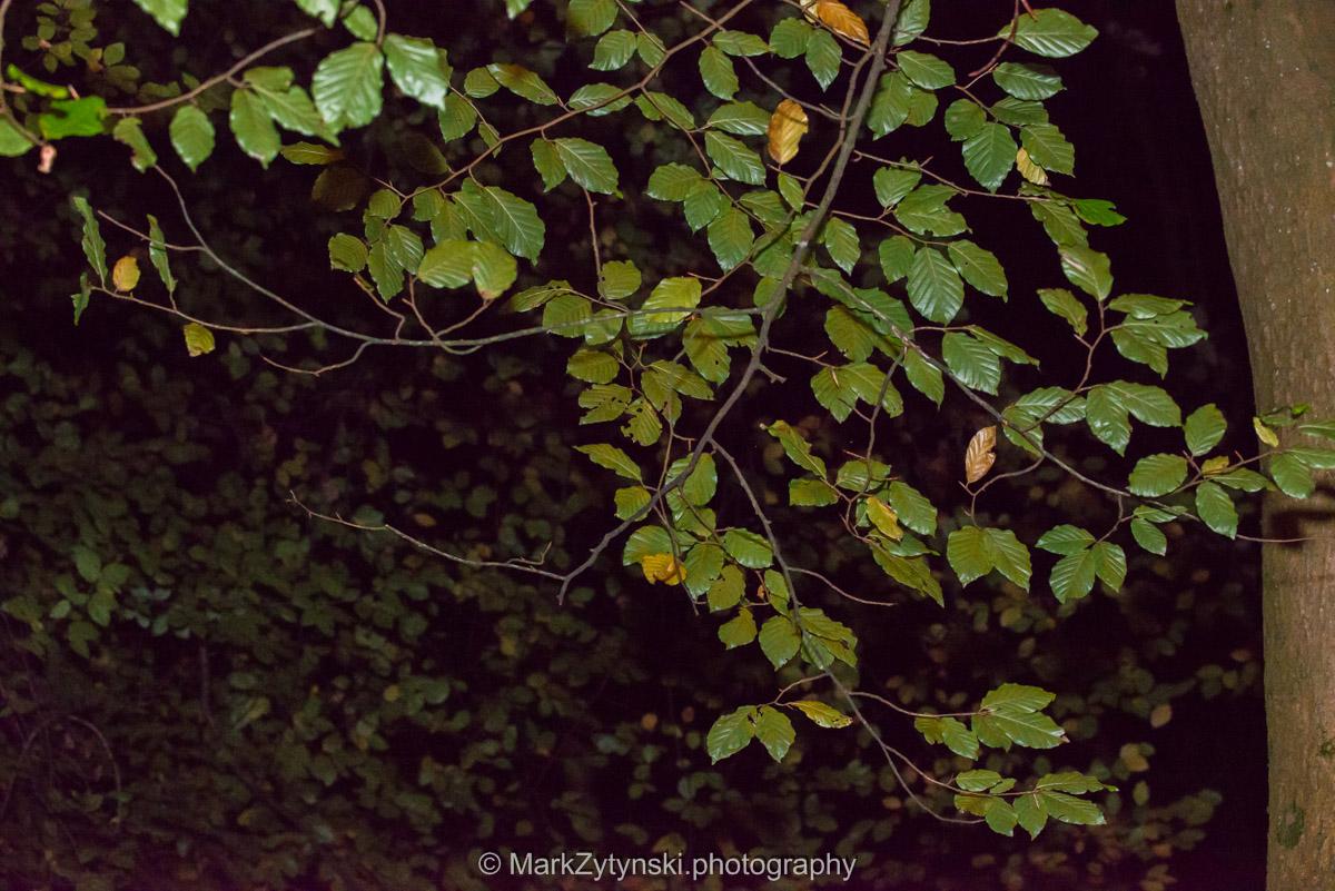 Trees-woodlands-8523.jpg