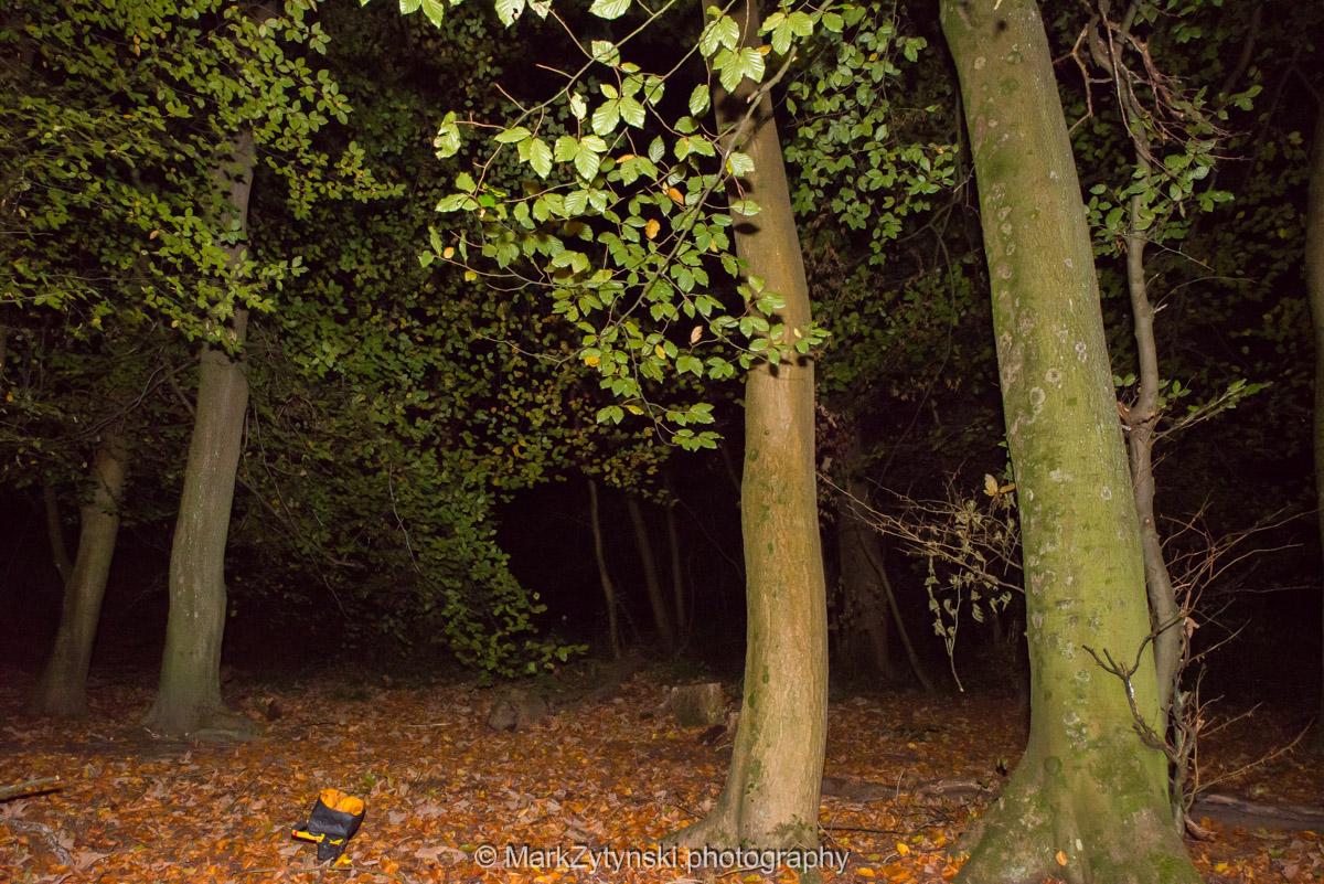 Trees-woodlands-8524.jpg