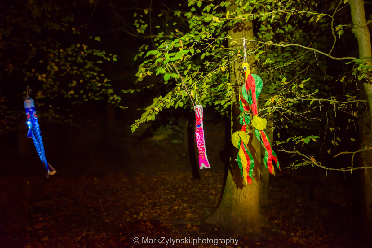 Trees-woodlands-8534.jpg