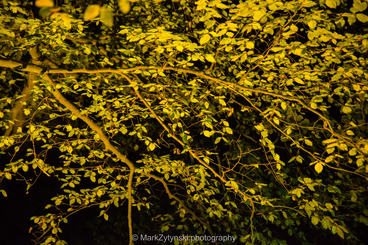 Trees-woodlands-8549.jpg