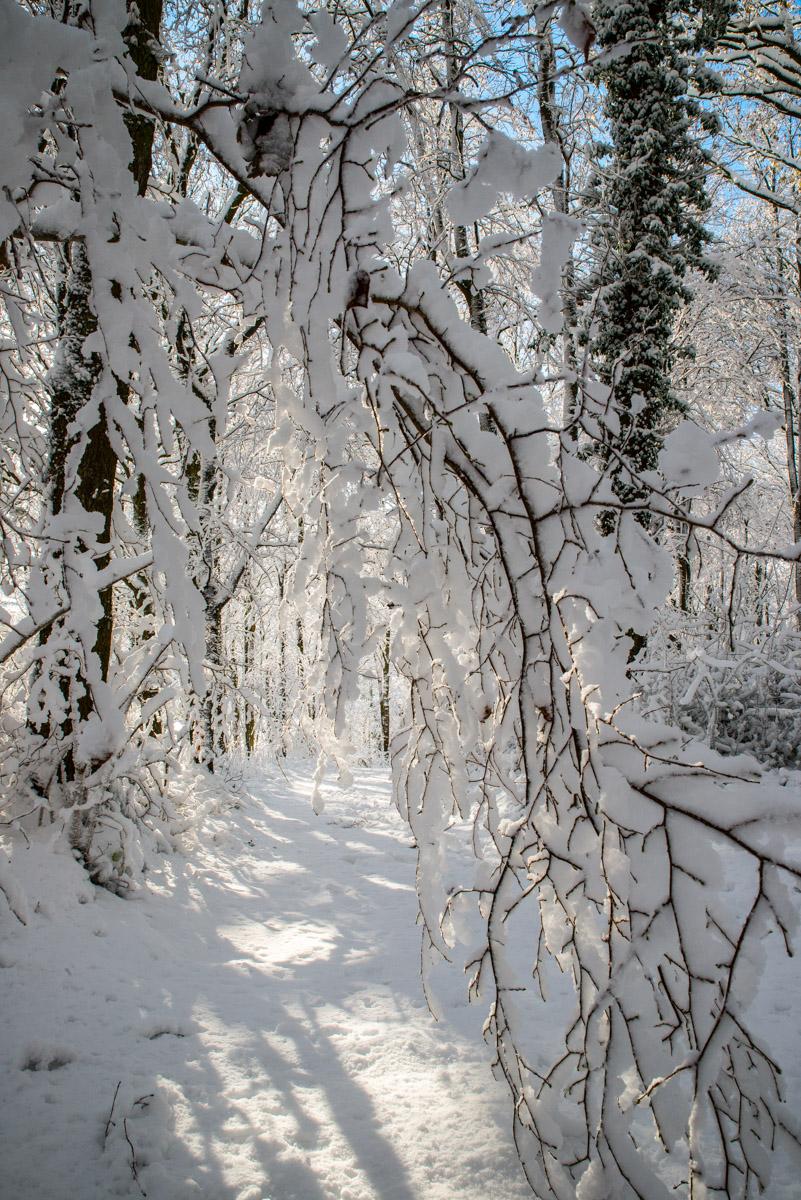 Trees-woodlands-snow-8964.jpg