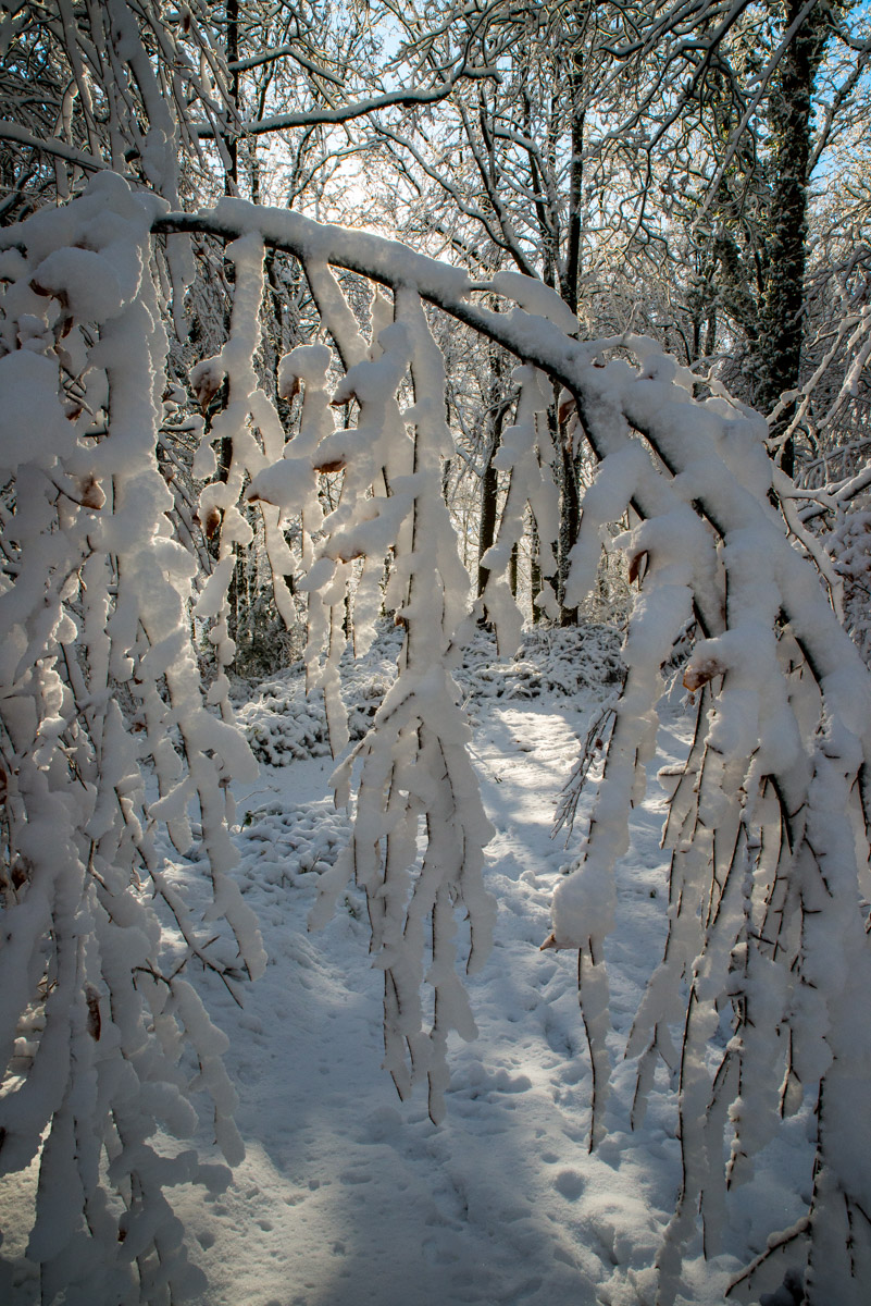 Trees-woodlands-snow-8976.jpg