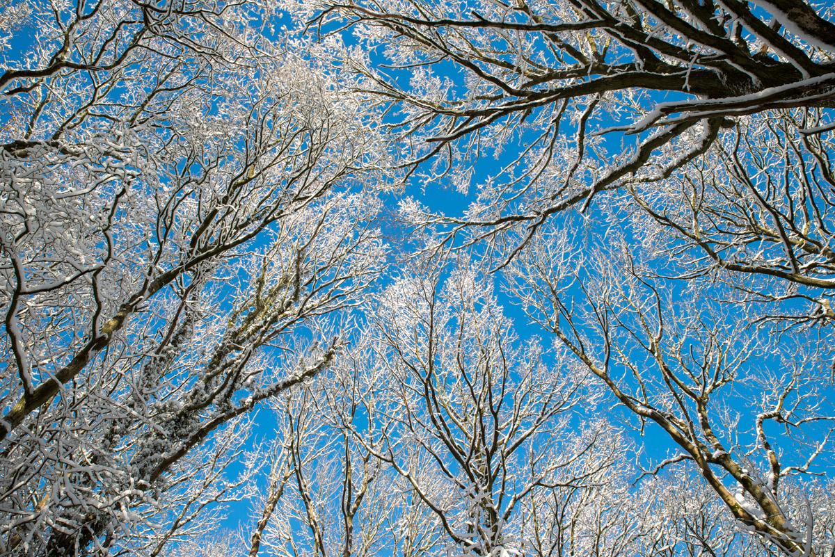 Trees-woodlands-snow-8971.jpg