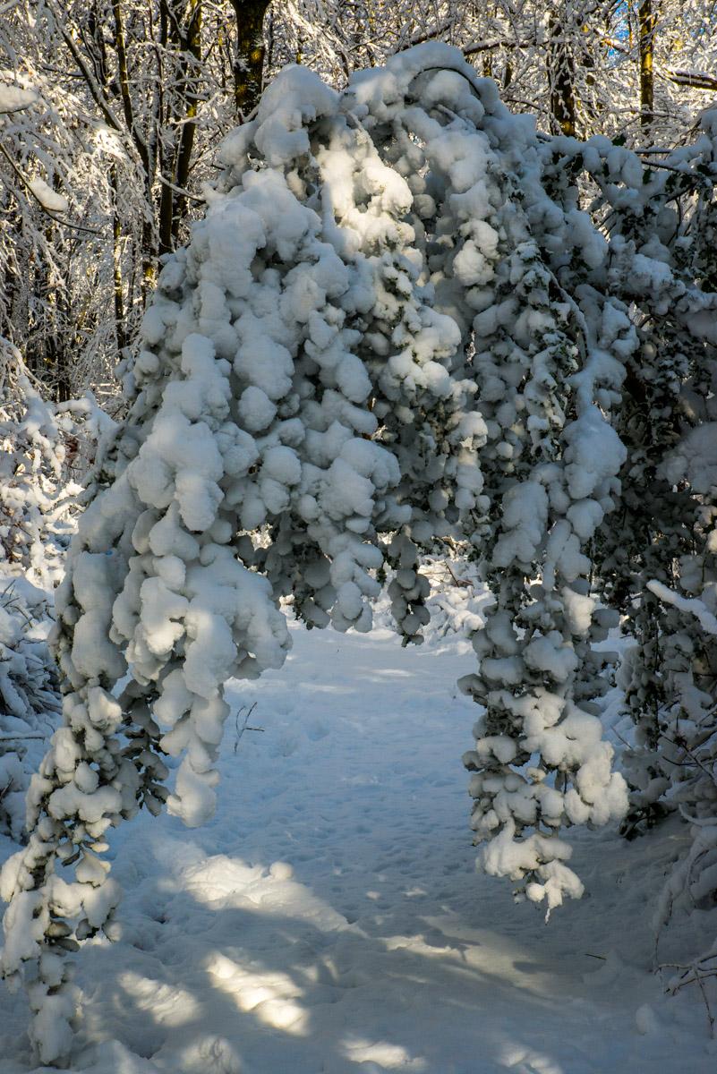 Trees-woodlands-snow-8977.jpg