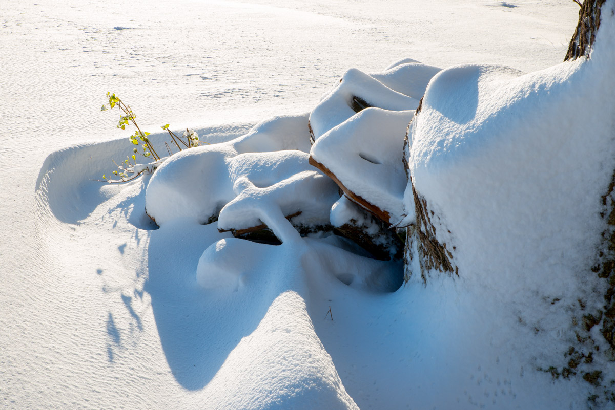 Trees-woodlands-snow-8984.jpg