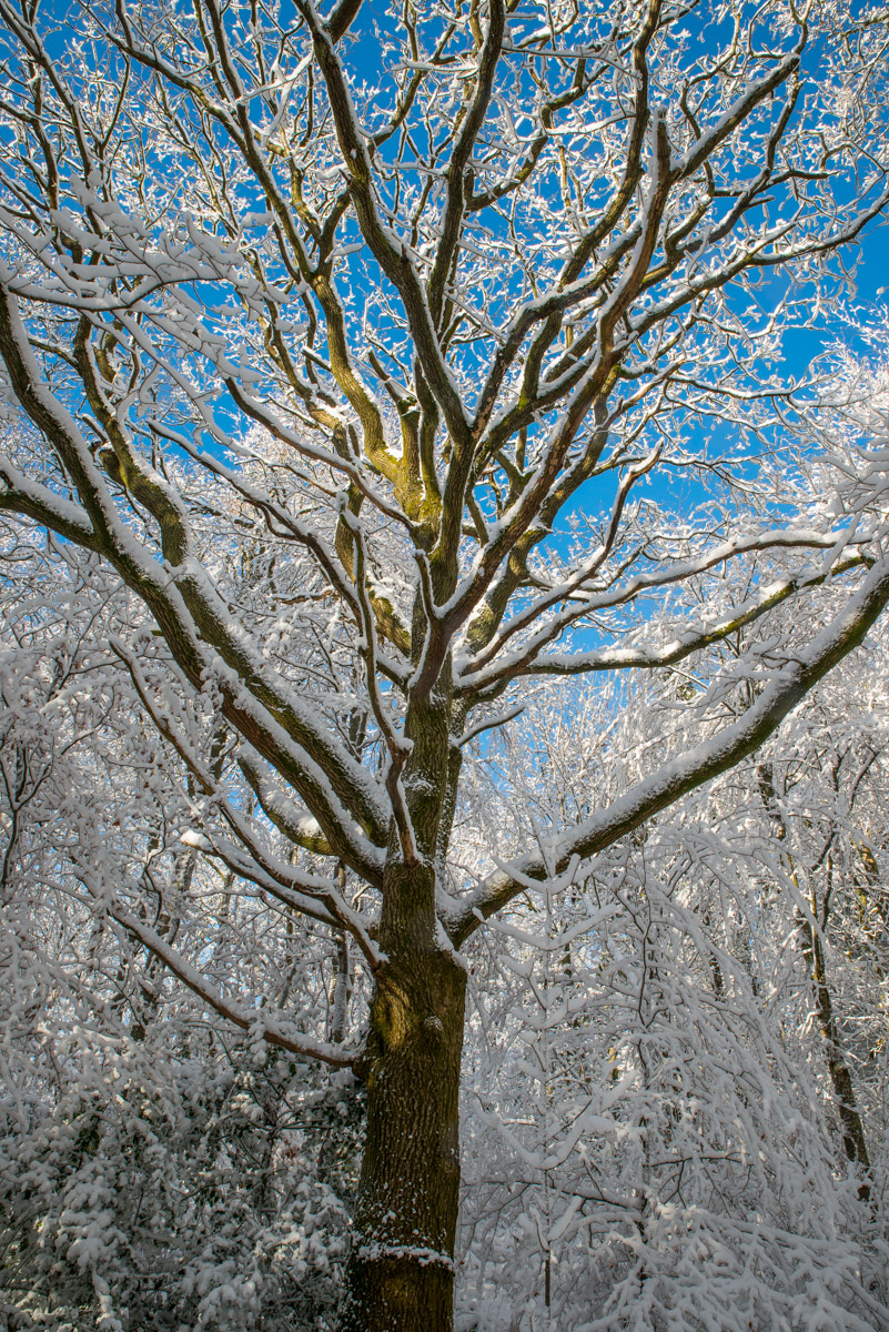 Trees-woodlands-snow-8982.jpg