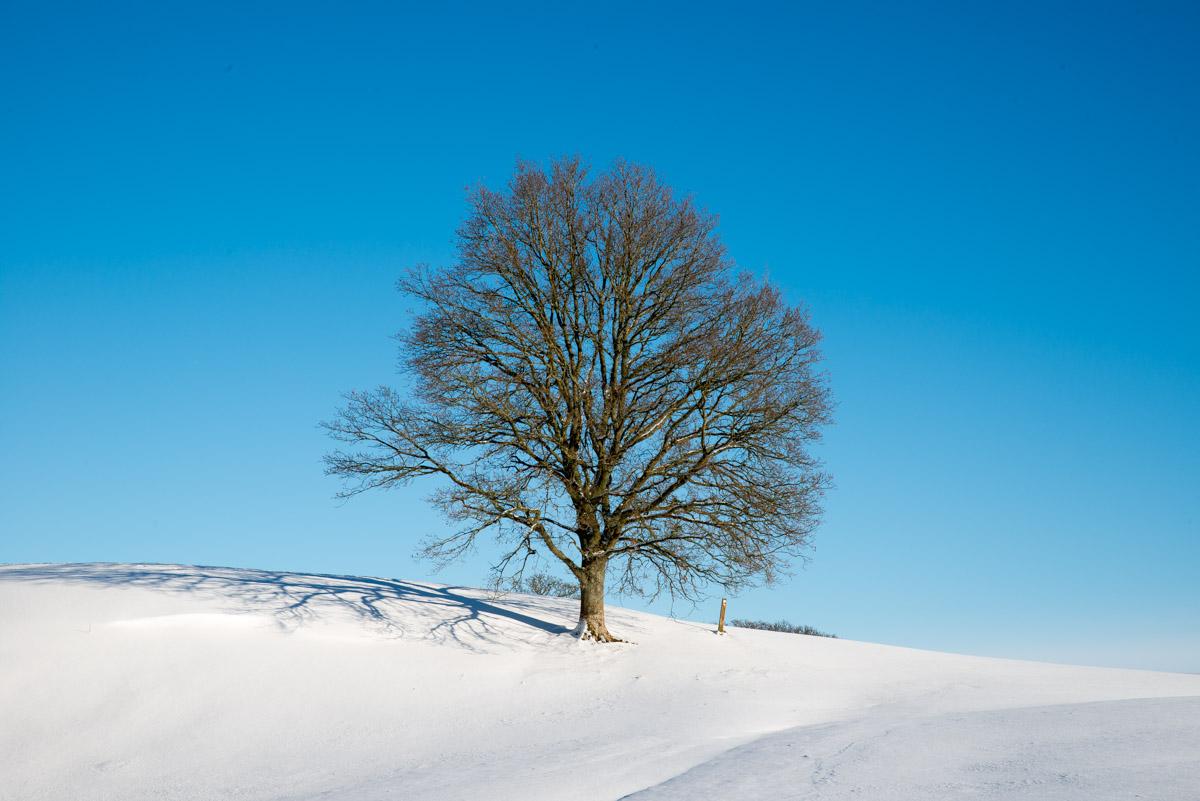 Trees-woodlands-snow-8987.jpg
