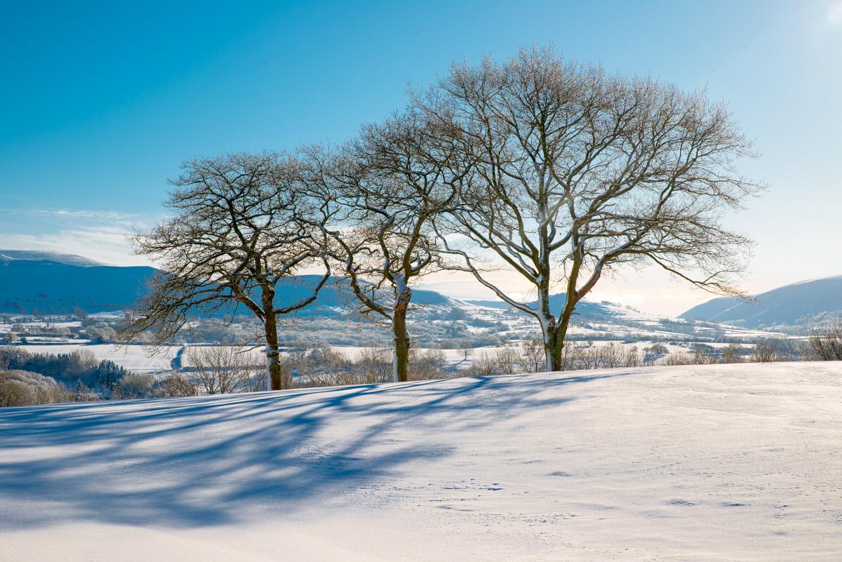 Trees-woodlands-snow-8993.jpg
