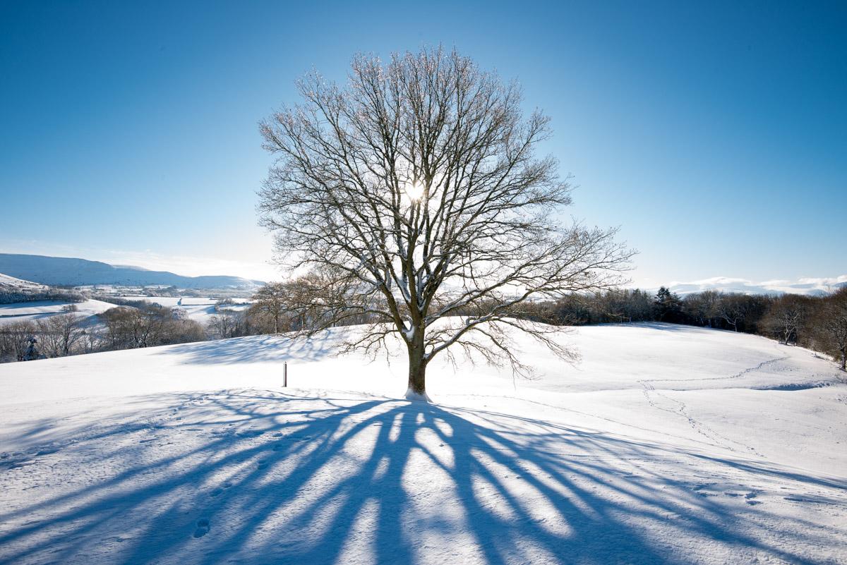 Trees-woodlands-snow-8997.jpg