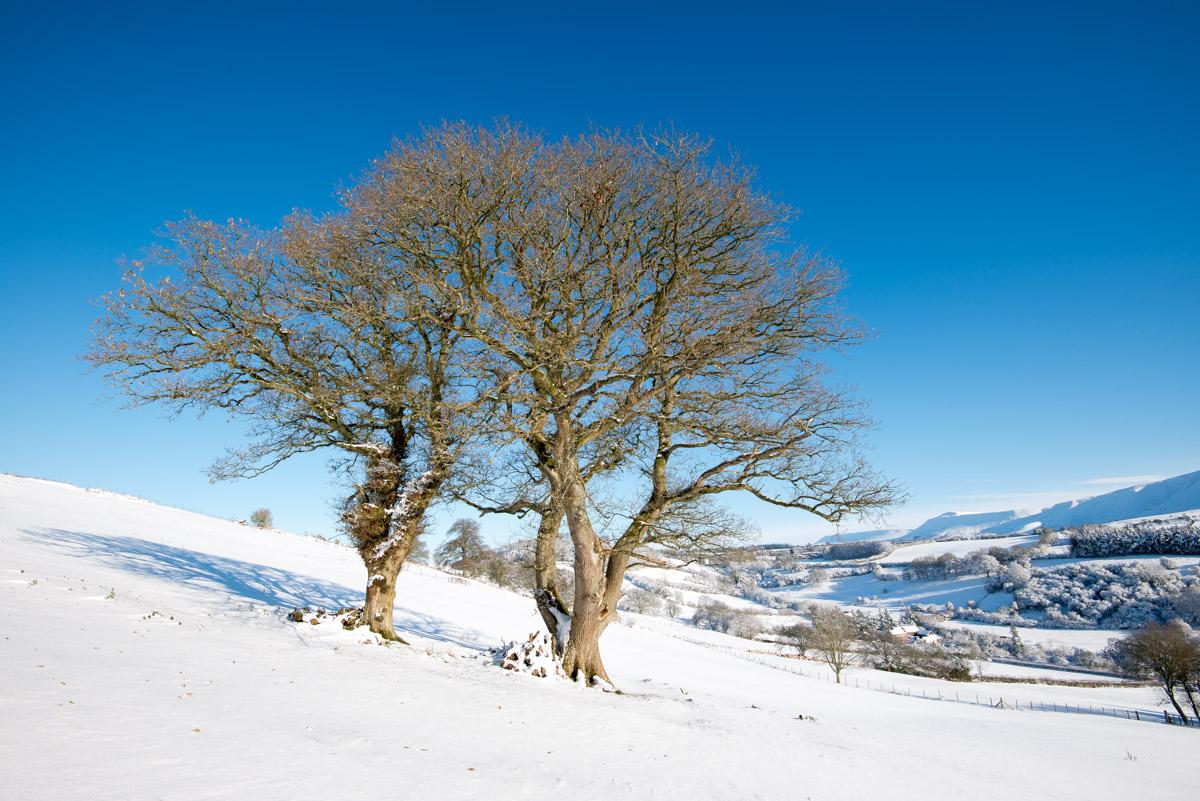 Trees-woodlands-snow-9001.jpg