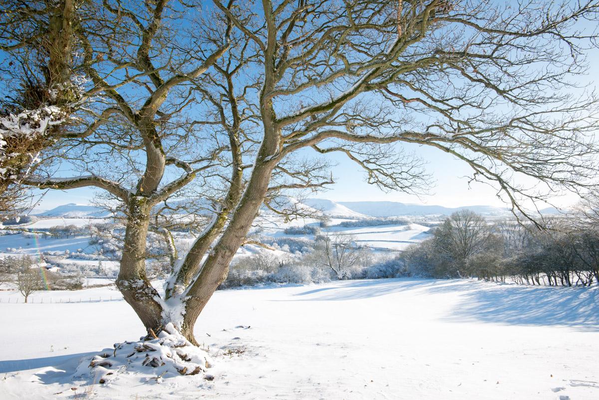 Trees-woodlands-snow-9005.jpg
