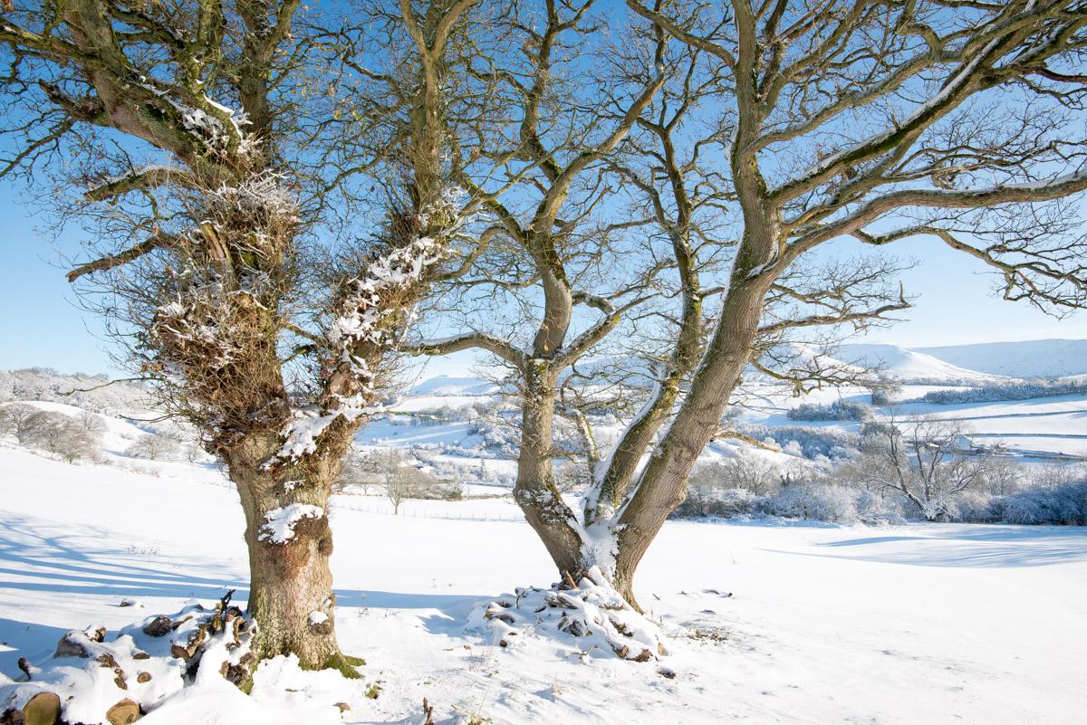 Trees-woodlands-snow-9007.jpg