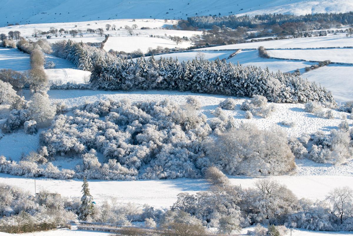 Trees-woodlands-snow-9015.jpg