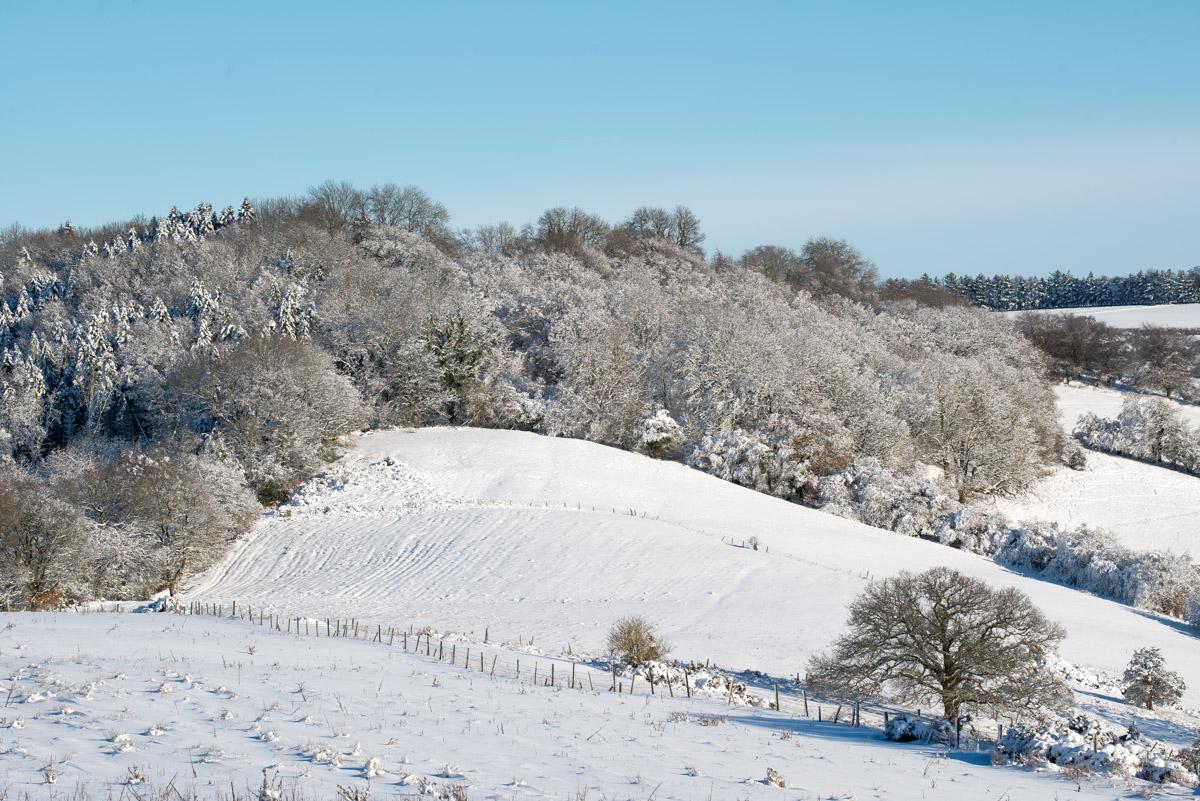 Trees-woodlands-snow-9022.jpg