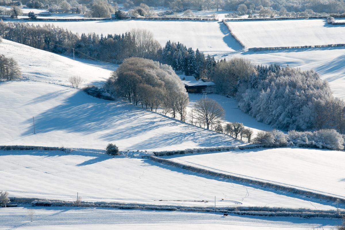 Trees-woodlands-snow-9029.jpg