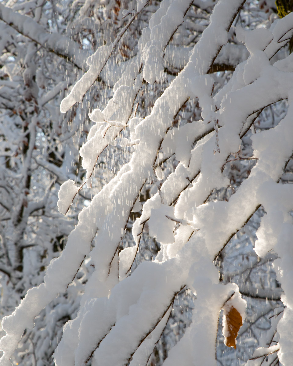 Trees-woodlands-snow-9051.jpg