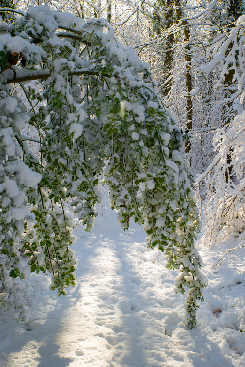 Trees-woodlands-snow-9052.jpg
