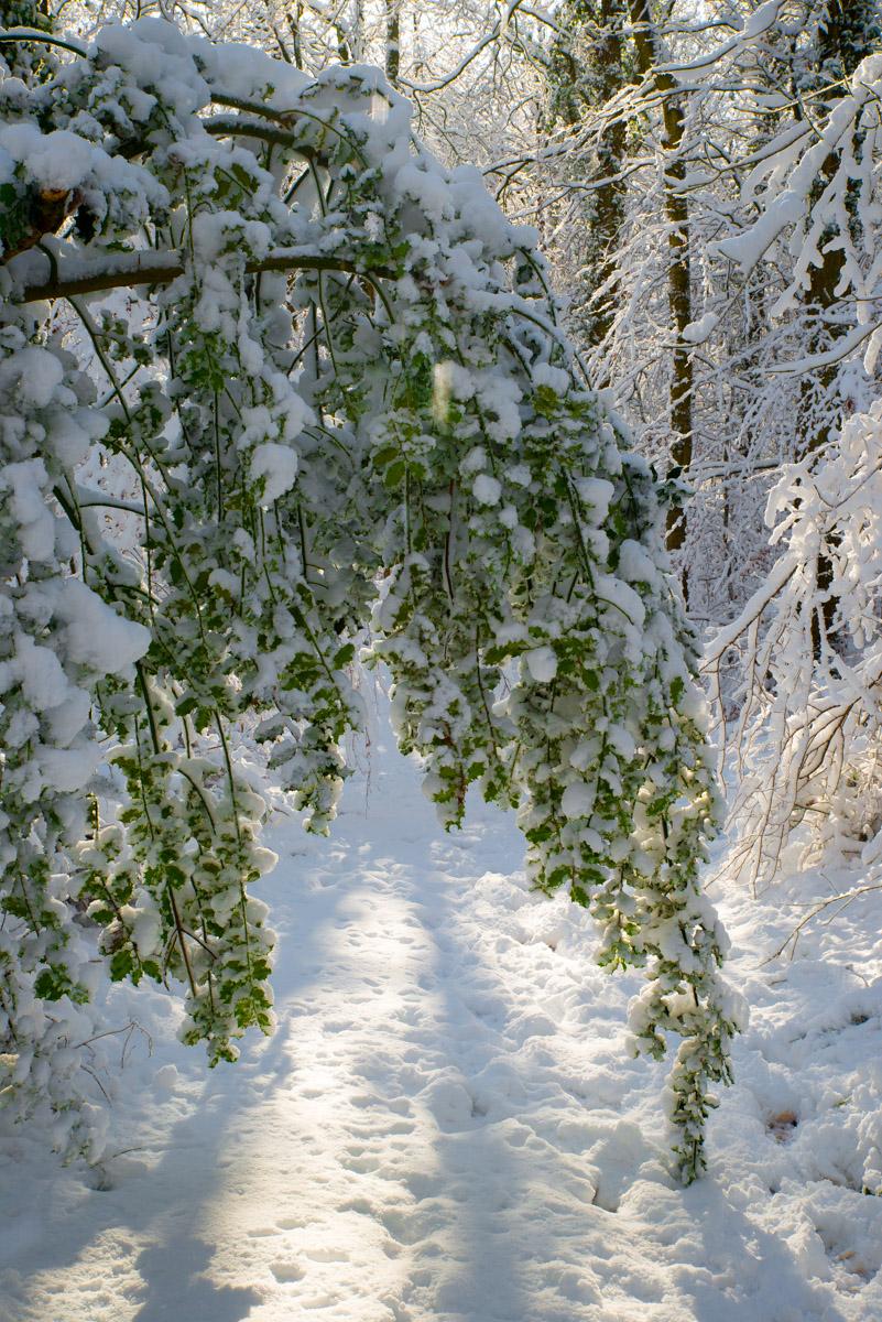 Trees-woodlands-snow-9052.jpg