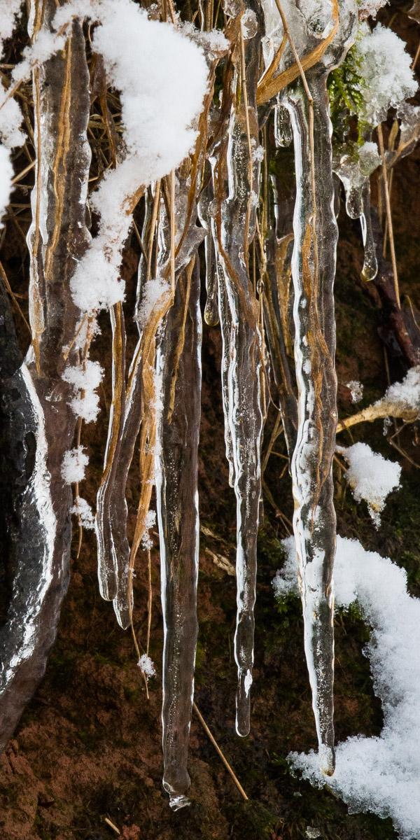 Trees-woodlands-snow-9058.jpg