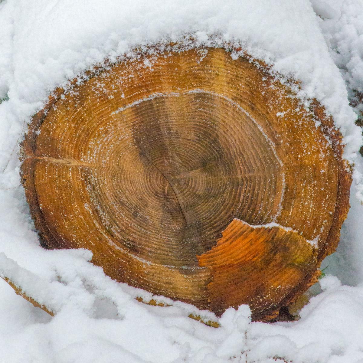 Trees-woodlands-snow-8901.jpg