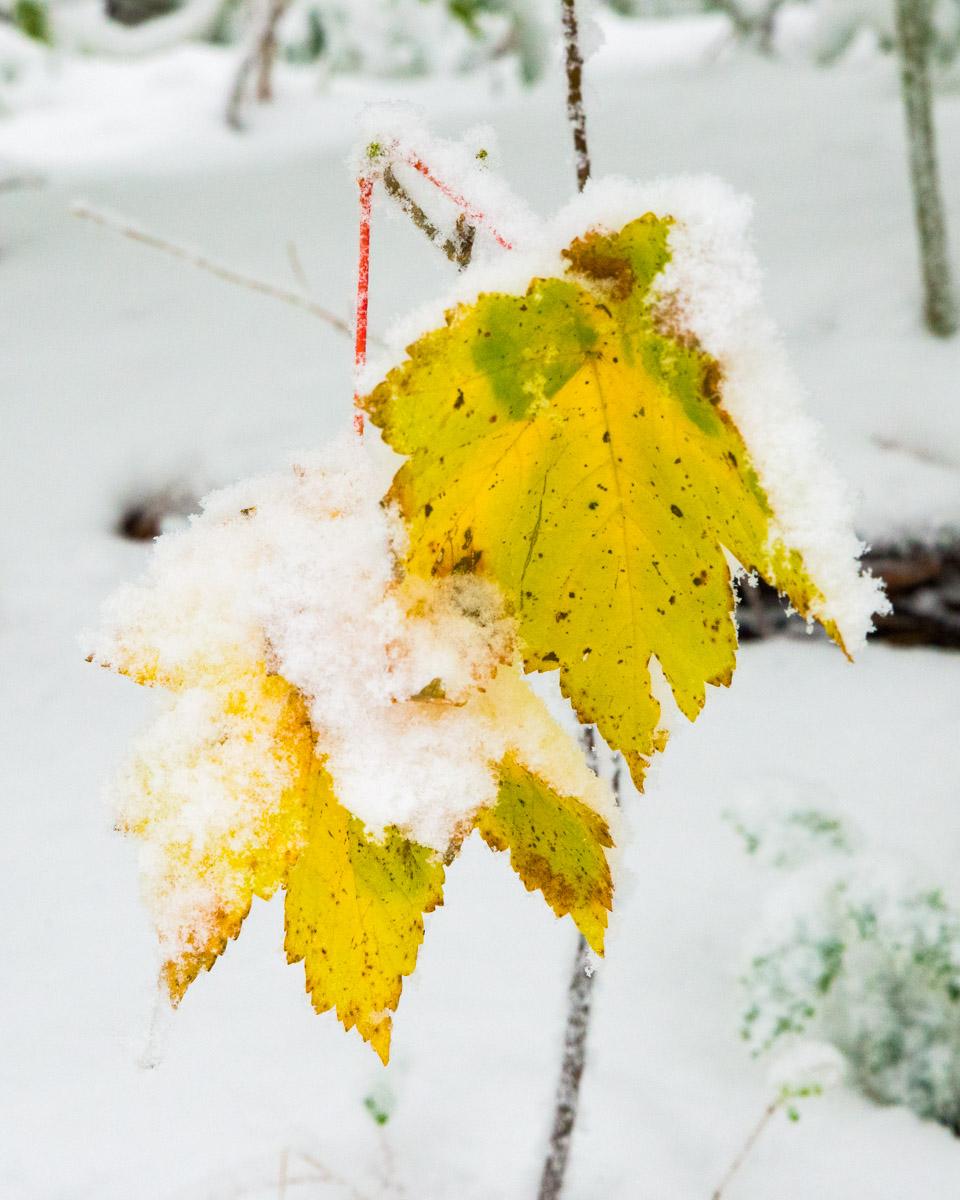 Trees-woodlands-snow-8910.jpg