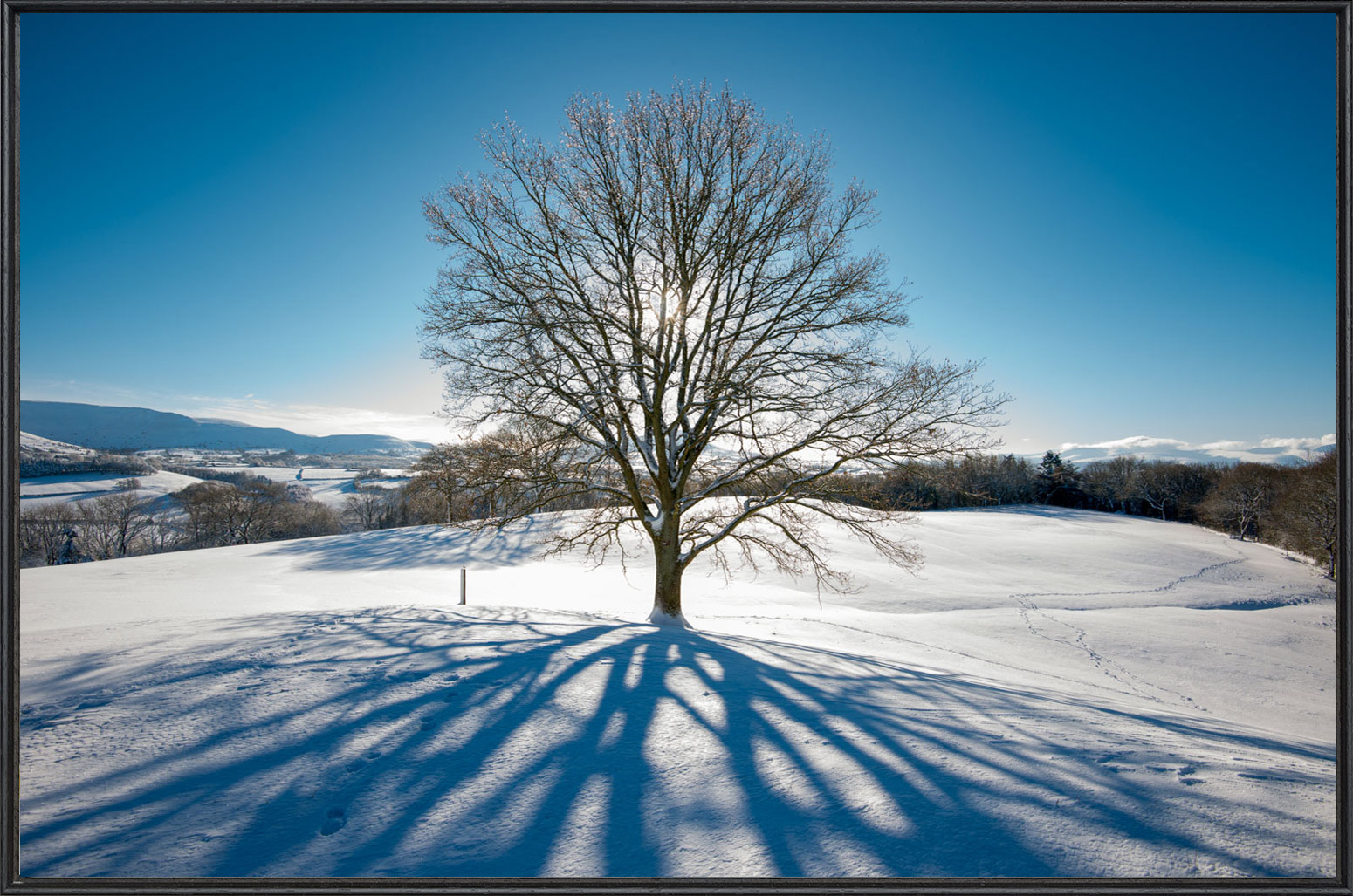 Tree in field snow sun shadow blue sky - Fine Art Print - Framed.jpg